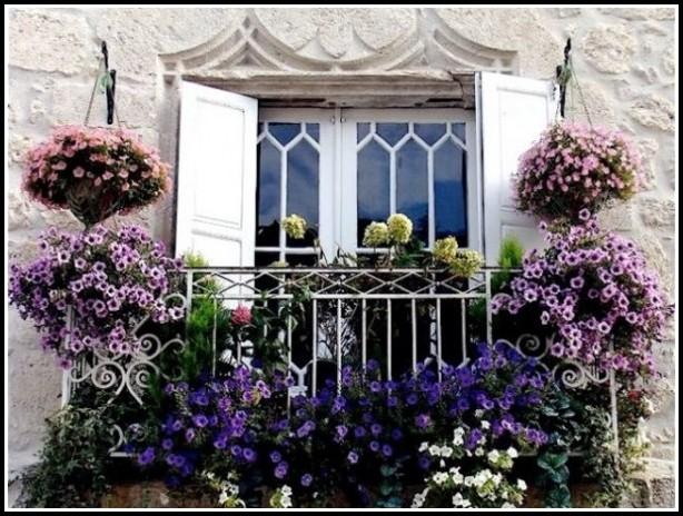 Pflanzen Für Den Balkon Im Winter