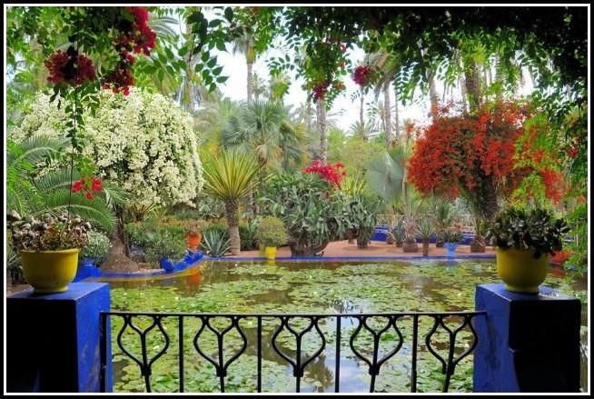 Pflanzen Für Den Balkon Winterfest