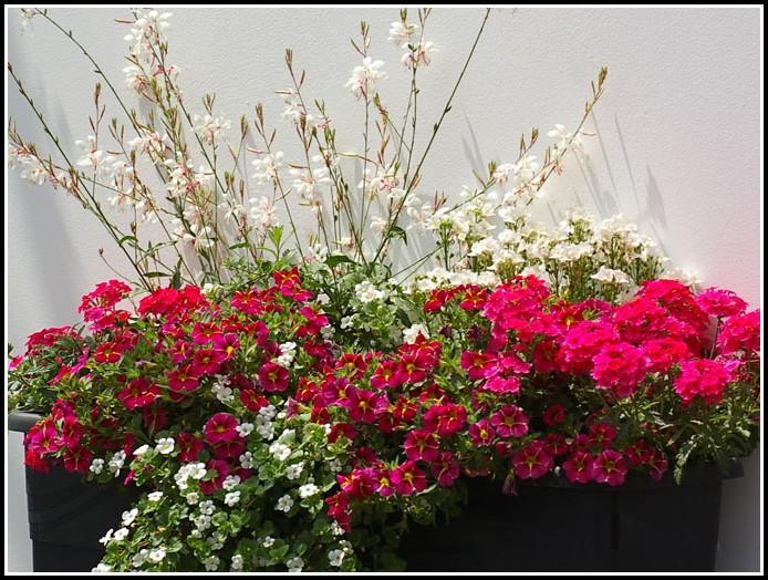 Pflanzen Für Den Balkon Winterhart