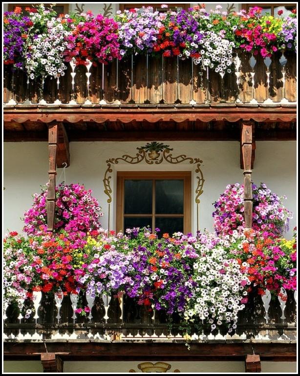 Pflegeleichte Blumen Für Den Balkon