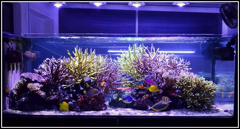 Rgb Led Beleuchtung Aquarium