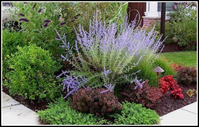 Salbei Garten Pflege