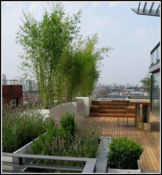 Sichtschutz Aus Pflanzen Balkon