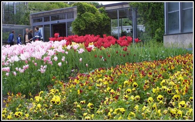 Tübingen Botanischer Garten Parken