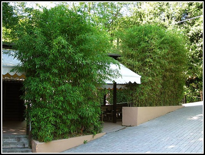 Terrasse Sichtschutz Mit Pflanzen