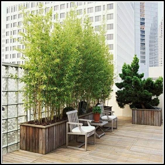 Terrassenpflanzen Sichtschutz