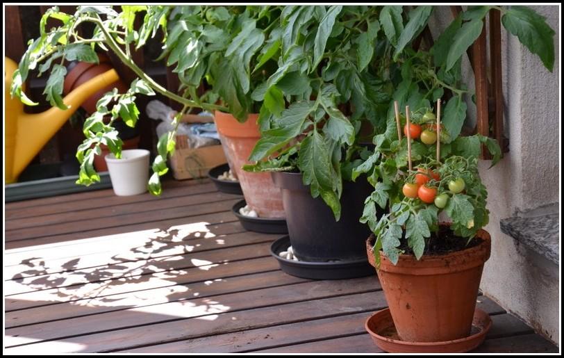 Tomaten Auf Dem Balkon Pflege