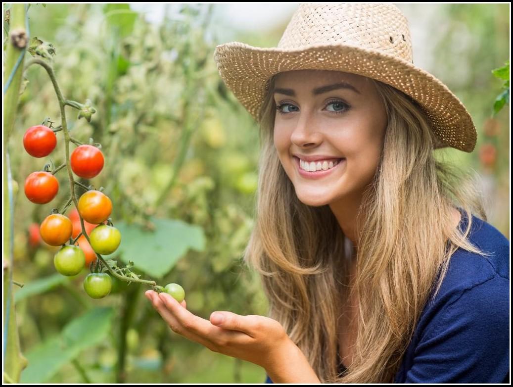 Tomaten Pflanzen Balkon Pflege