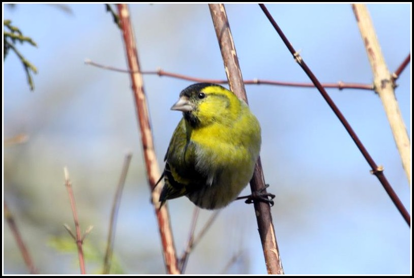 Vögel In Unserem Garten
