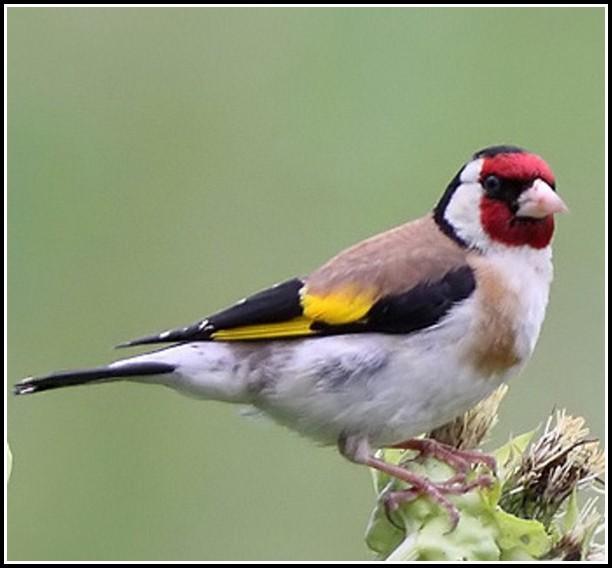 Vogel Im Garten Bestimmen