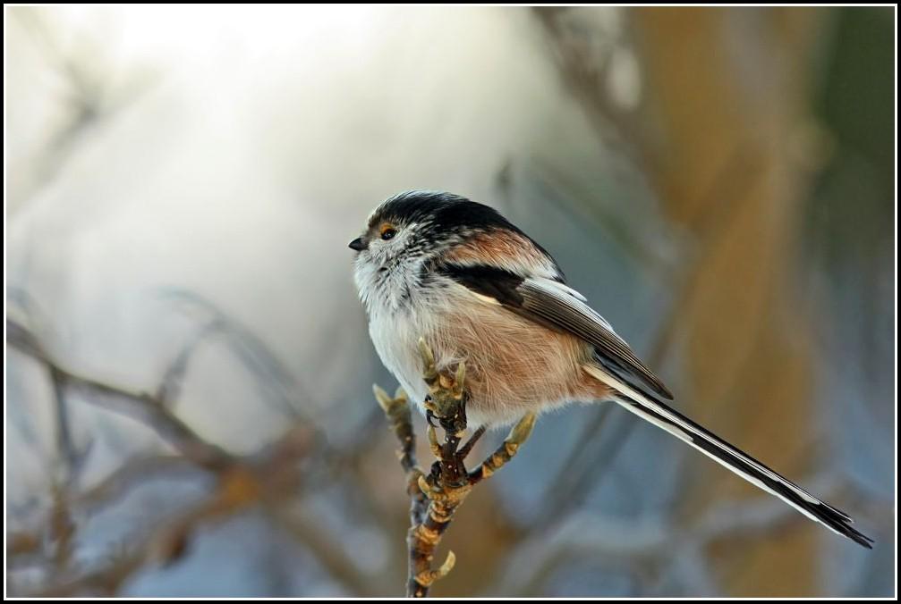 Vogel Im Garten Gefunden
