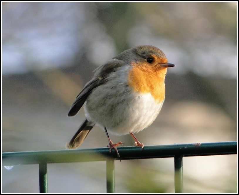 Vogelschutz Im Garten