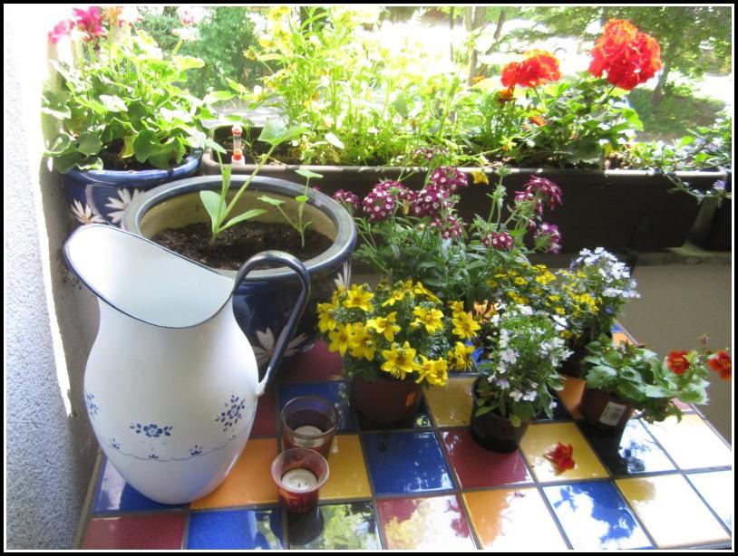 Welche Pflanzen Auf Dem Balkon