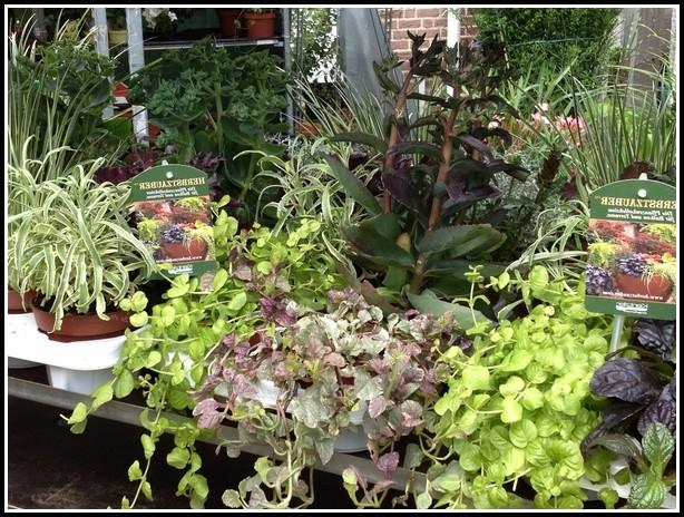 Winterharte Kübelpflanzen Für Balkon