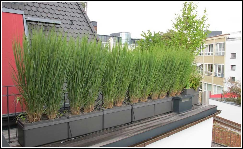 Winterharte Kübelpflanzen Für Den Balkon