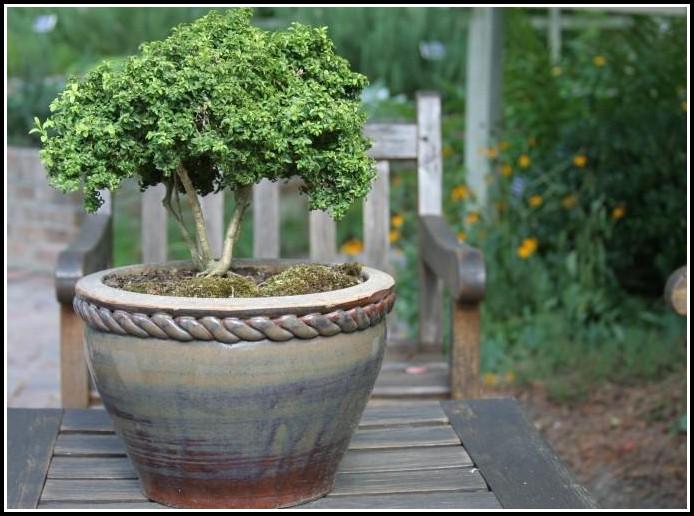 Winterharte Kübelpflanzen Für Sonnige Terrassen
