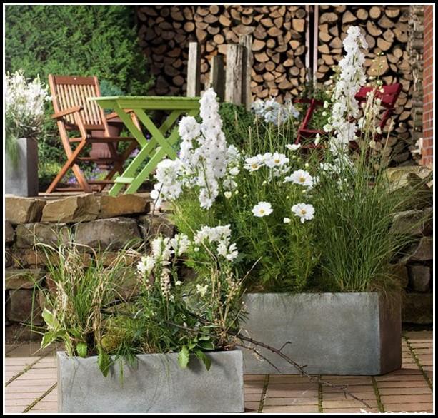 Winterharte Pflanzen Für Balkonkästen