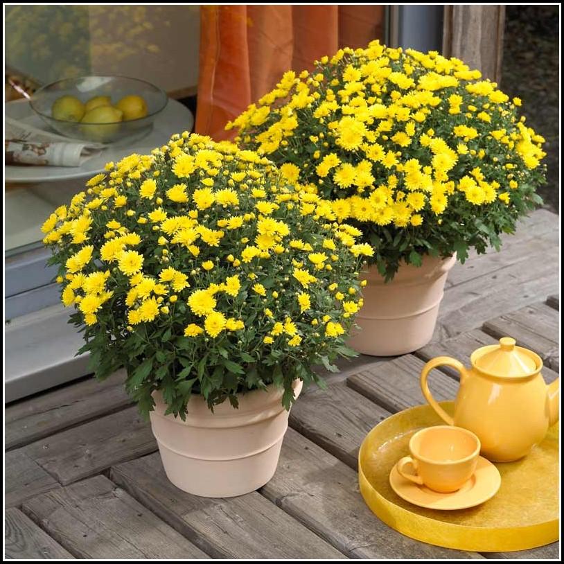 Winterharte Pflanzen Für Den Balkonkasten
