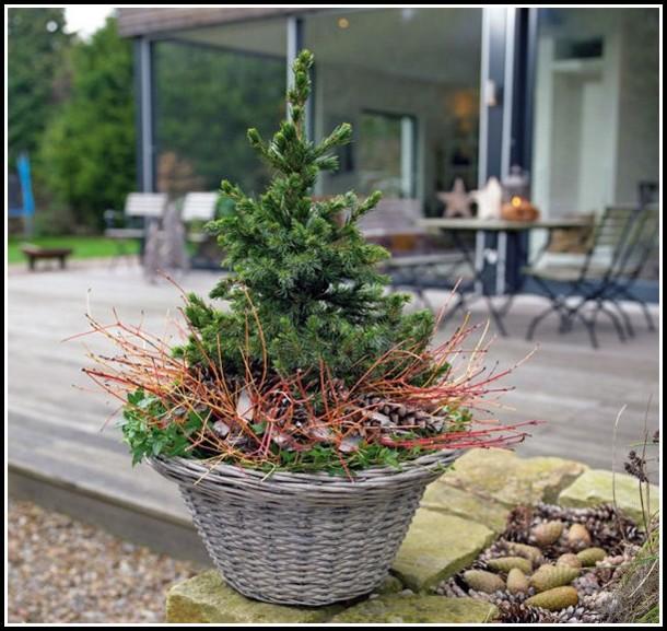 Winterpflanzen Für Den Balkon