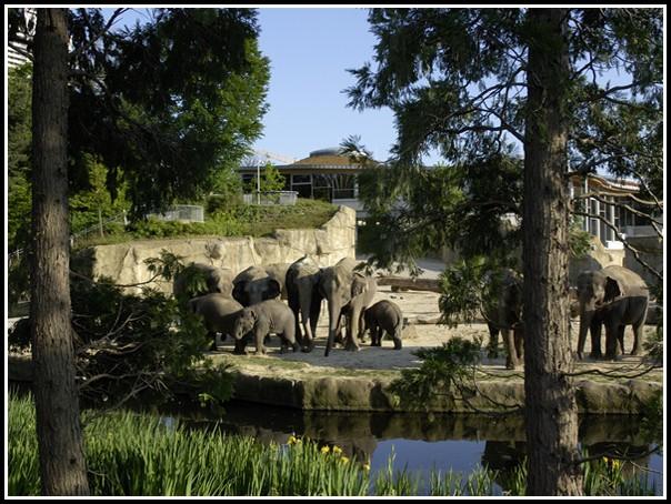 Zoologischer Garten Köln Parken