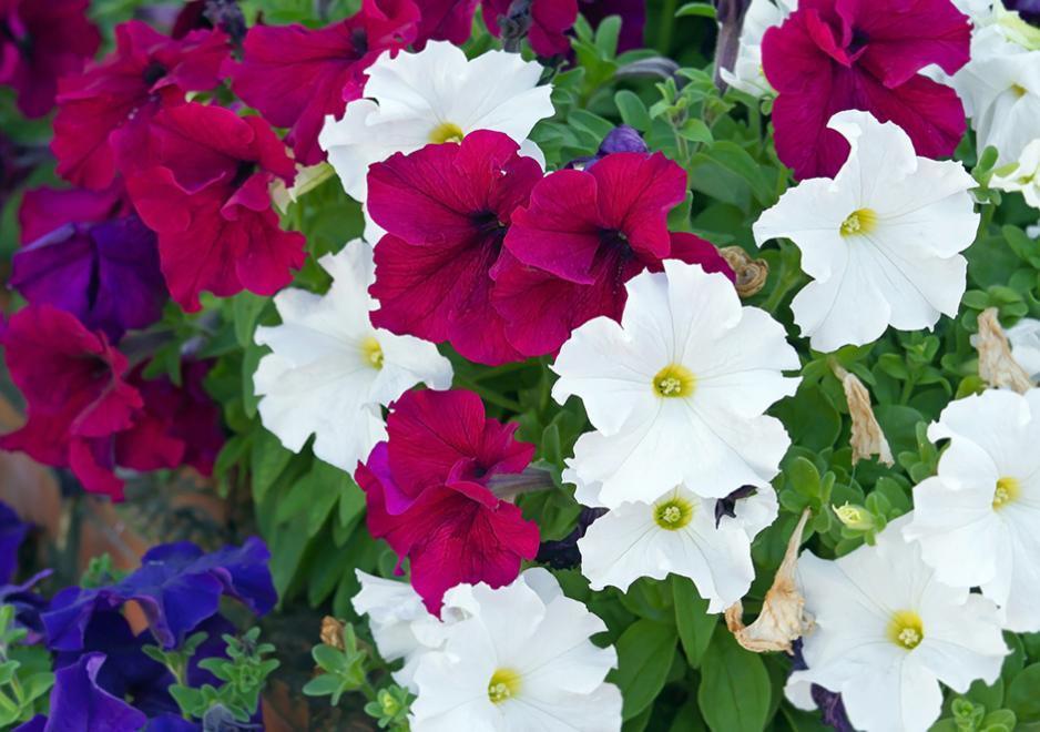 Welche Blumen Blühen Den Ganzen Sommer Im Garten