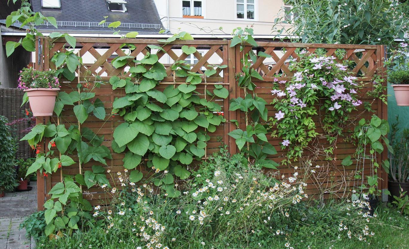 Balkon Sichtschutz Pflanzen Künstlich