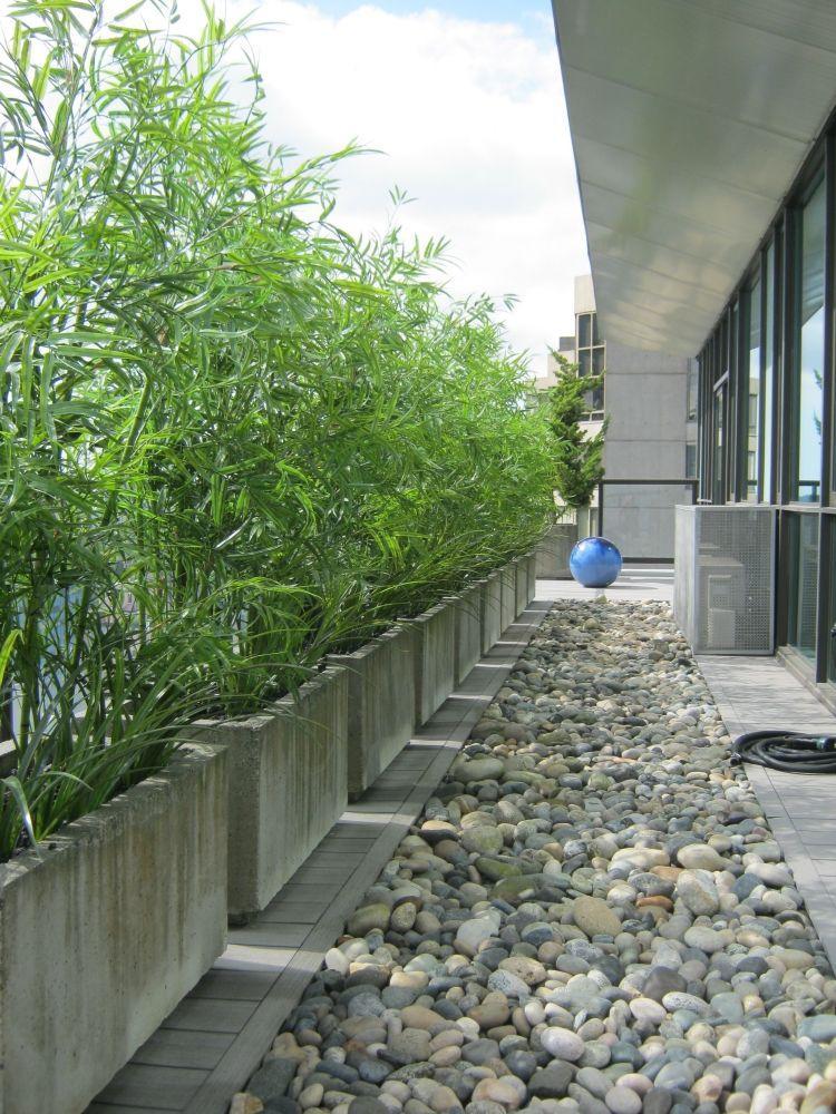 Bambus Als Sichtschutz Im Kübel