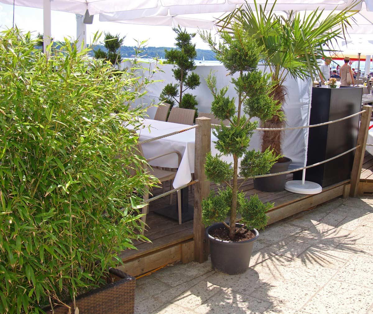 Bambus Balkon Sichtschutz