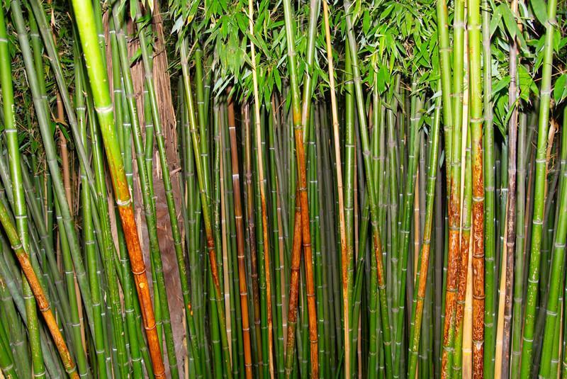 Bambus Im Garten Entfernen