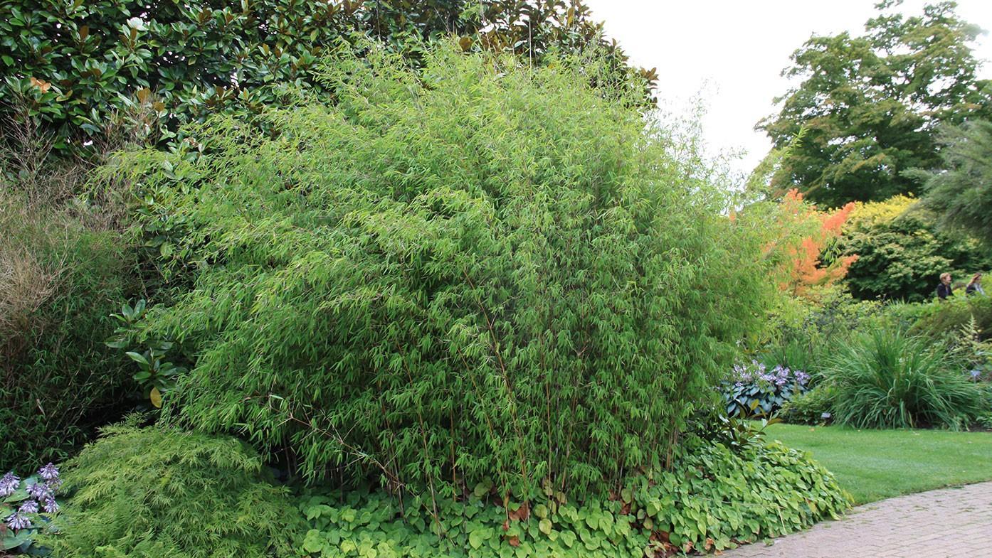 Bambus Im Garten Pflanzen