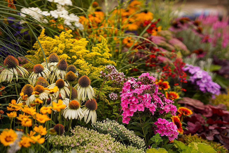 Bauerngarten Blumen Gelb