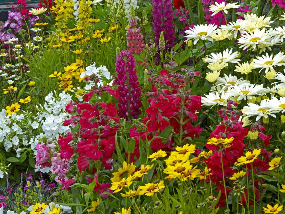 Bauerngarten Blumen Mehrjährig