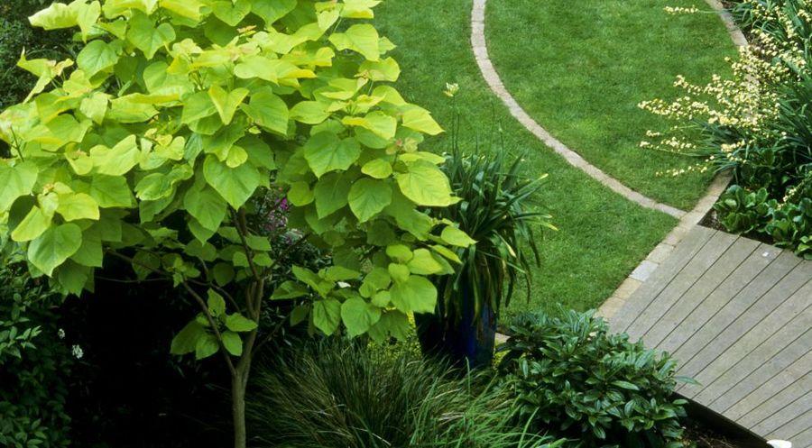 Baum Vorgarten Hochstamm