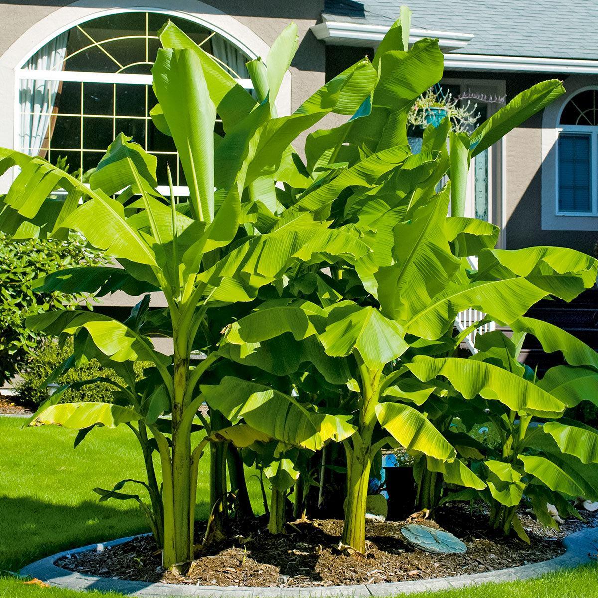 Bäume Für Den Garten Winterhart