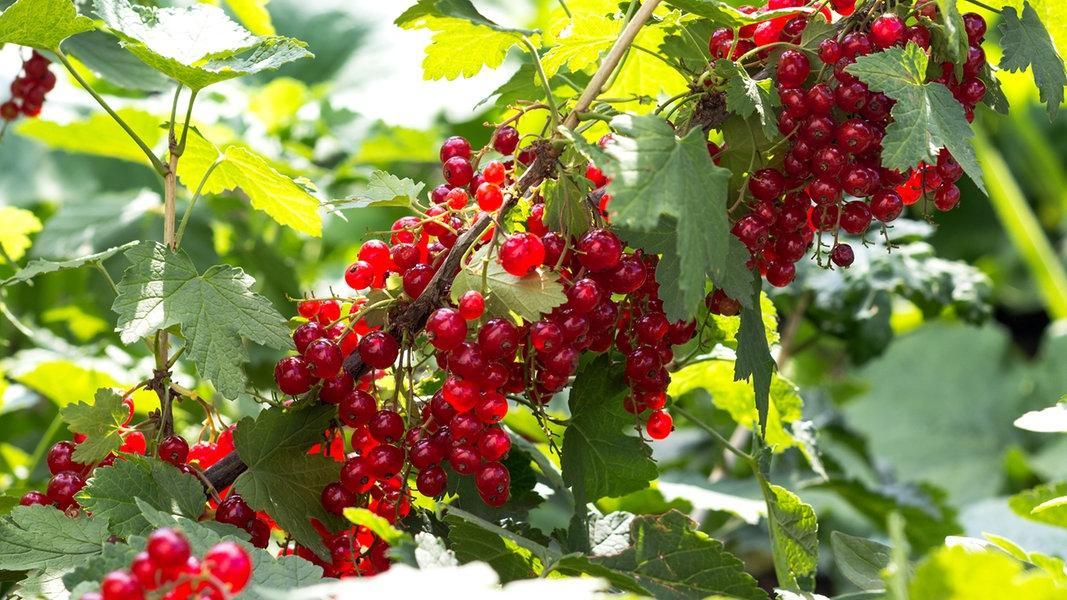 Beeren Pflanzen Herbst