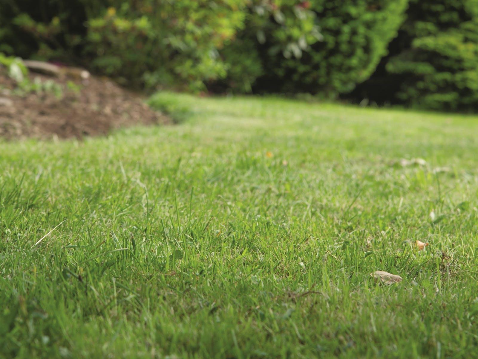 Beet Anlegen Auf Rasen