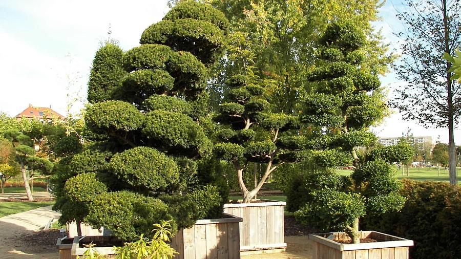Besondere Gartenpflanzen Winterhart