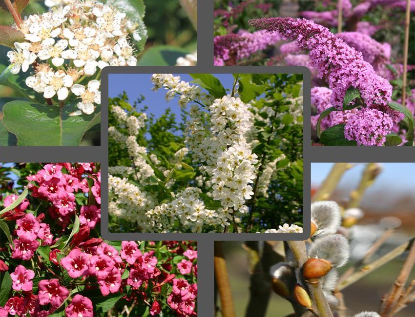 Bienenfreundliche Sträucher Liste