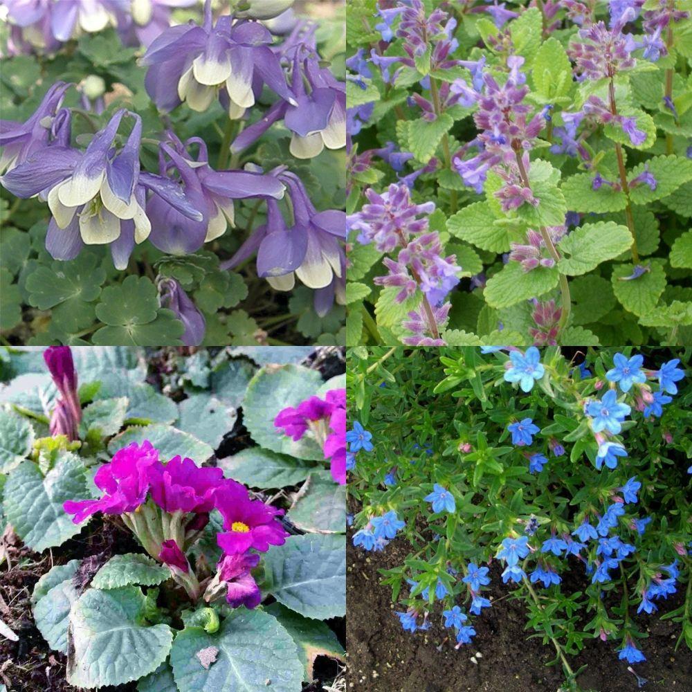 Blühend Pflanzen Für Steingarten