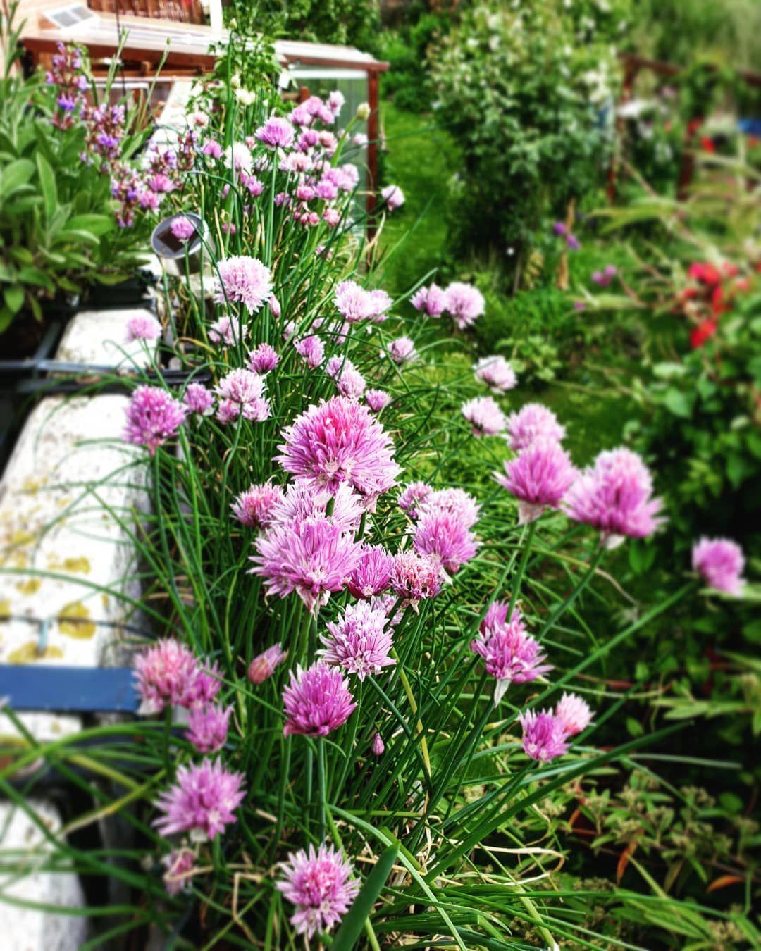 Blühende Winterharte Pflanzen Balkon