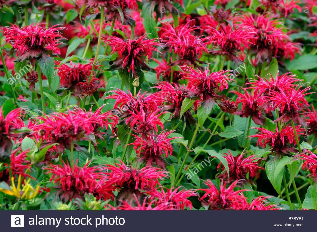 Blumen Für Den Garten Winterhart