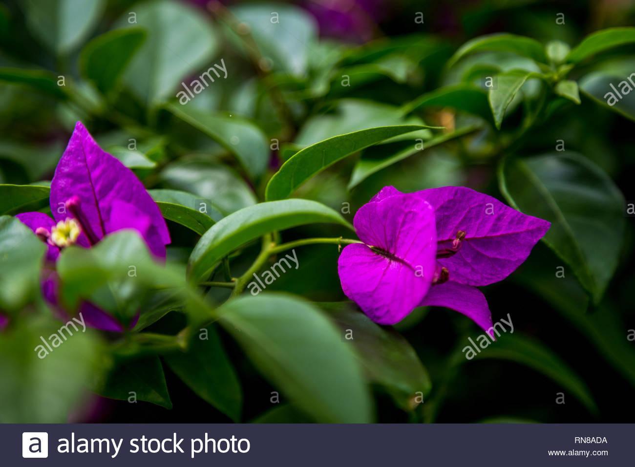 Blumen Garten Ideen