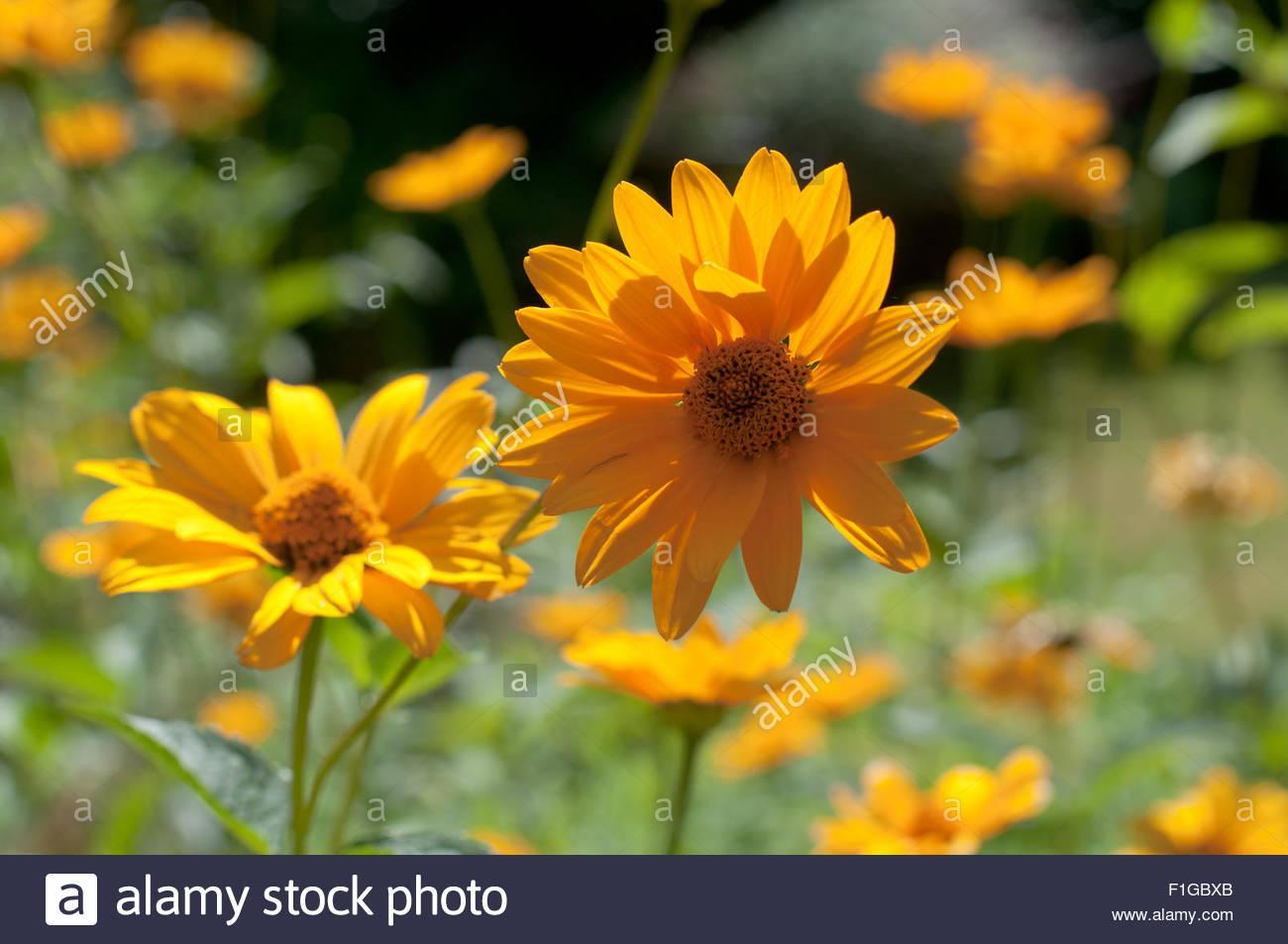 Blumen Im Garten August