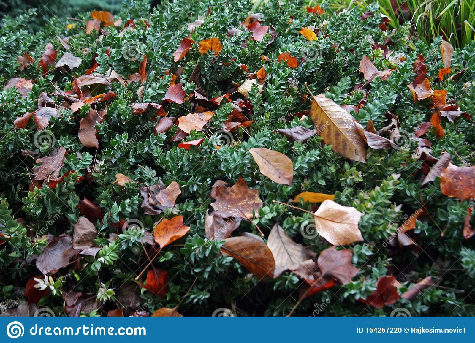 Blumen Pflanzen In Kroatien