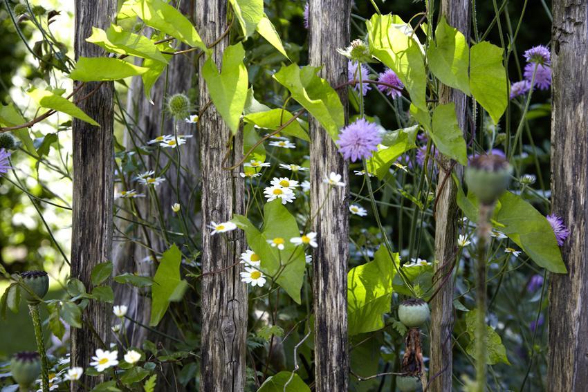Blumen Pflanzen Sprüche