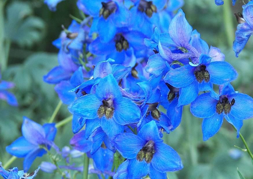 Blumen Winterhart Blühend