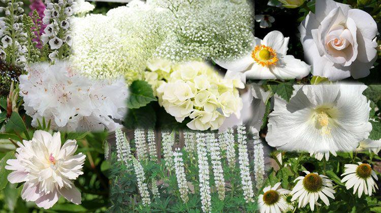 Blumen Winterhart Garten