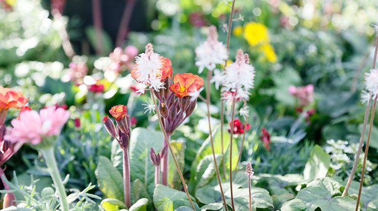 Blumen Winterhart Topf