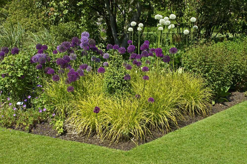 Bodendecker Pflanzen Halbschatten