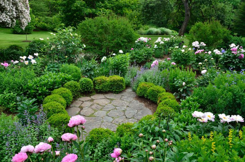 Englische Gärten Pflanzen